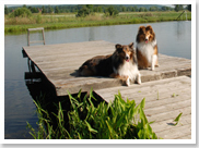 We offer dog boarding and kennel services