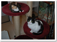 We offer cat boarding and kennel services